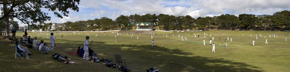 Cricket at Auckland Domain