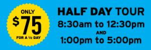 Auckland Half Day Tour pricing